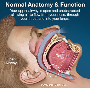normal-anatomy